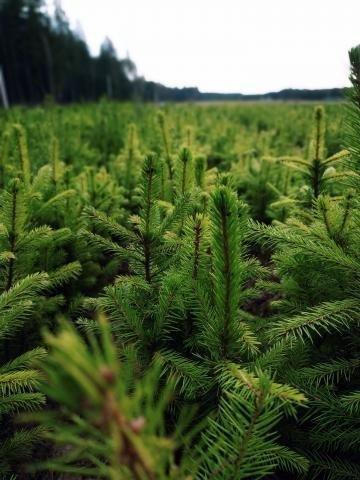 Компенсационное лесовосстановление